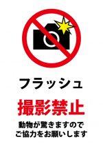 動物へのフラッシュ撮影禁止の注意貼り紙テンプレート